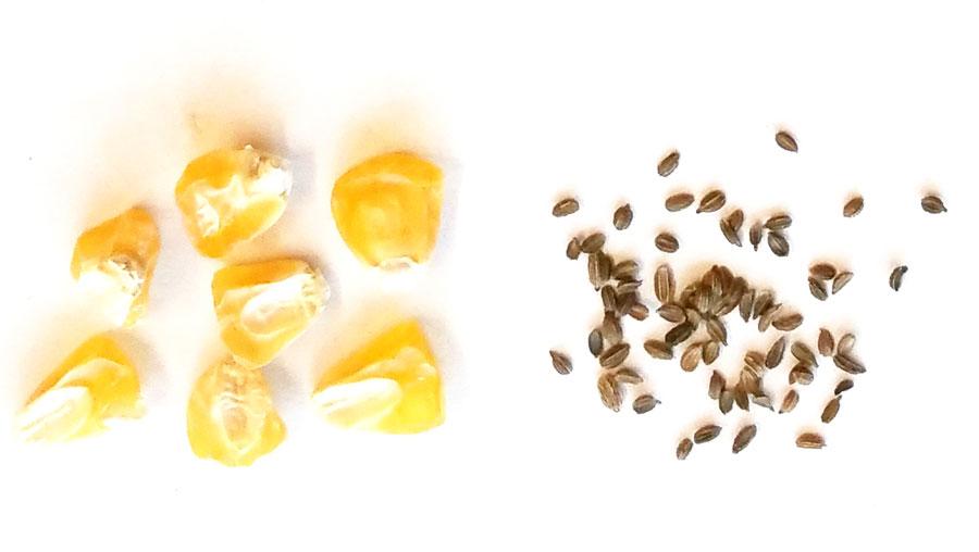 Zuordnungsquiz: Saatgut trifft Pflanze