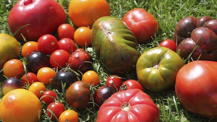 Sa 6.3.2021 | Das 3 x 3 der Vielfaltsgärtnerei – Tomaten, Paprika, Chili & Co.