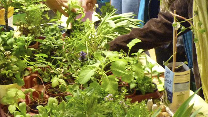 Sa 8.5.2021 | Pflanzen-Tauschbörse im ÖBZ
