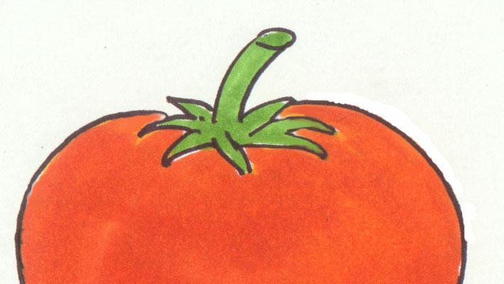 Tomaten: Vom Samen bis zur Ernte